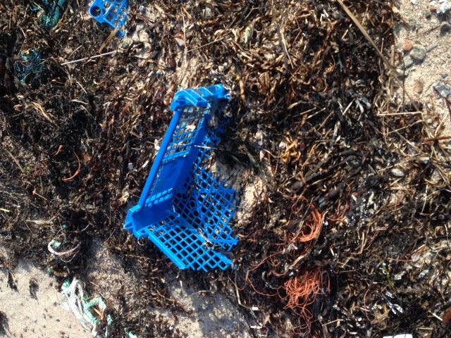 Vill du hjälpa till med att hålla vår kust ren?